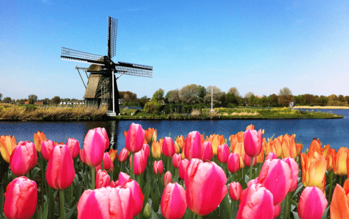 Dentist: realize your dreams, your future lies in the Netherlands!